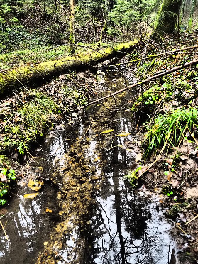 Little creek in forest with tree  trunk. Little creek in forest with tree trunk dramatic stock photography