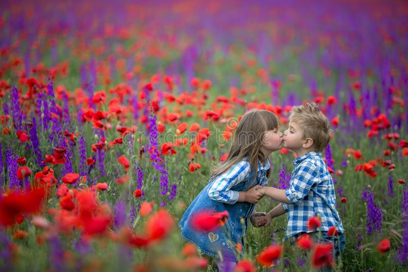 Little curly blond boy and girl play in poppy flower field. Child picking red poppies. Toddler kid in summer meadow royalty free stock image