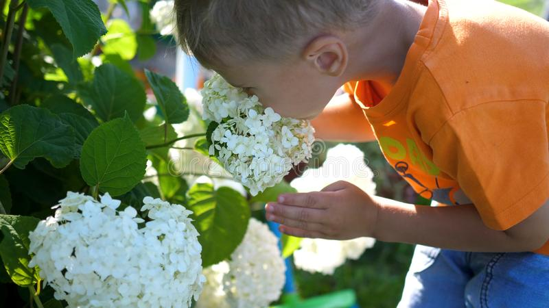 A little cute baby gently enjoys the smell of flowers. The child picks up a flower and inhales its fragrance. Blossoming stock photography
