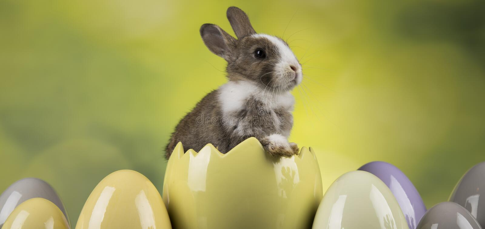 Little cute baby rabbit, Easter animal holiday, eggs and green background. Little cute baby rabbit and easter eggs royalty free stock photo