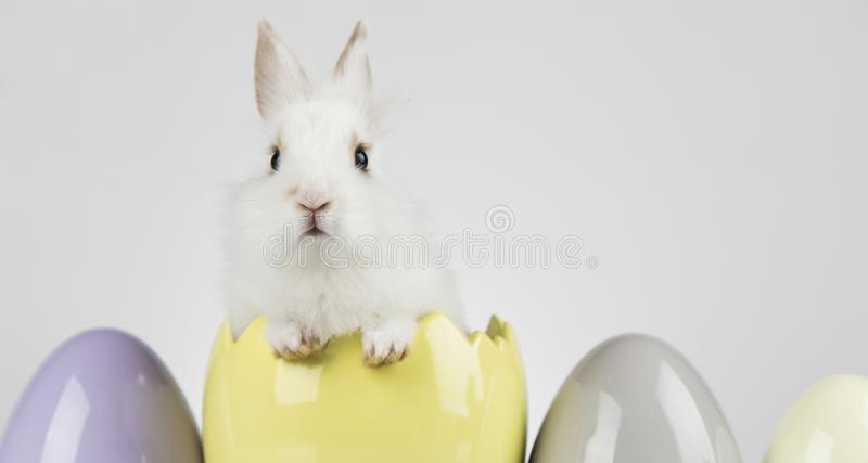 Little cute baby rabbit and easter eggs, white background stock images