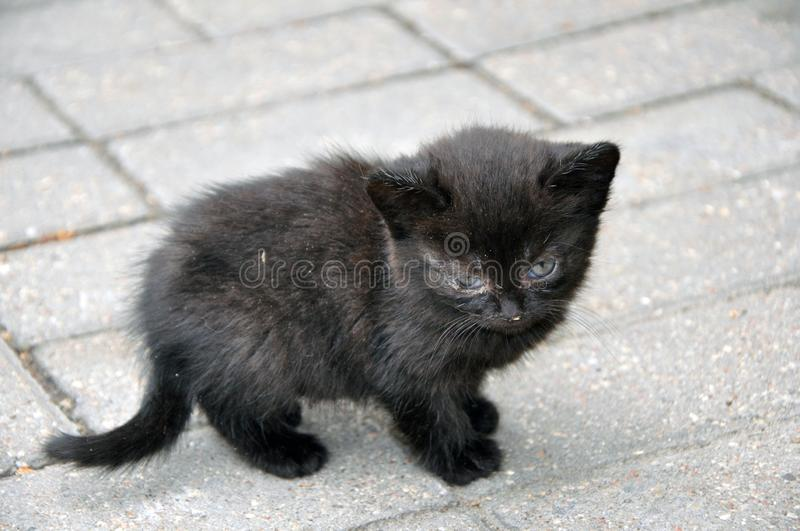 Little cute black kitty kitten for the first time on the street royalty free stock photo
