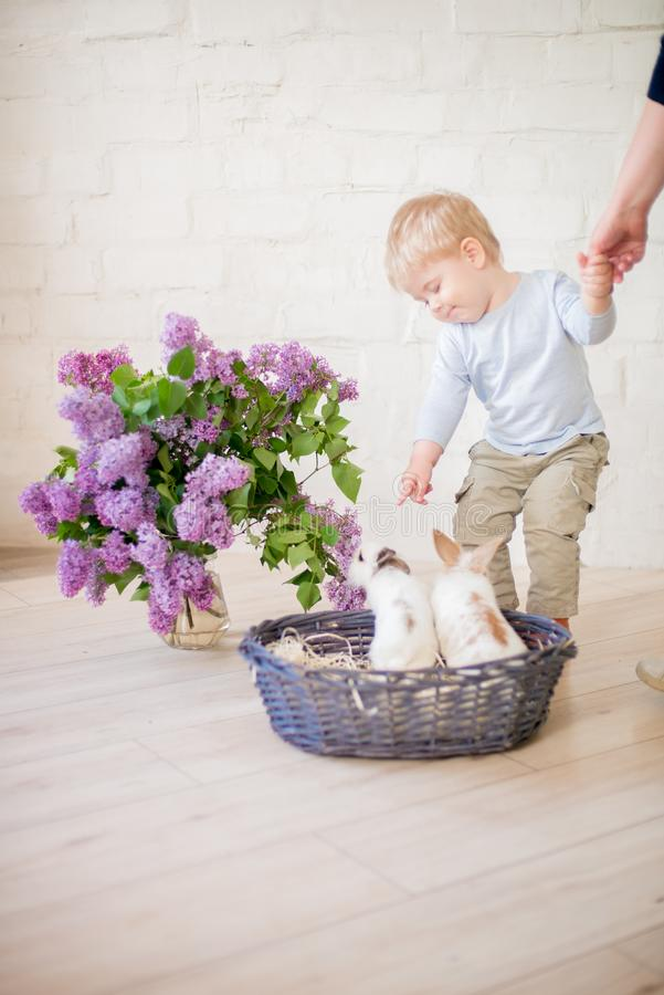 Little cute boy with blond hair with little bunnies with lilac flowers in a wicker basket stock image