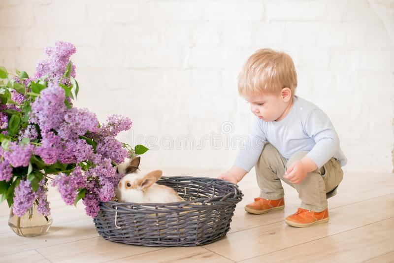 Little cute boy with blond hair with little bunnies with lilac flowers in a wicker basket stock photography