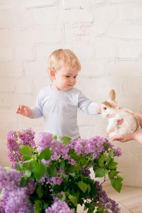 Little cute boy with blond hair with little bunnies with lilac flowers in a wicker basket stock images