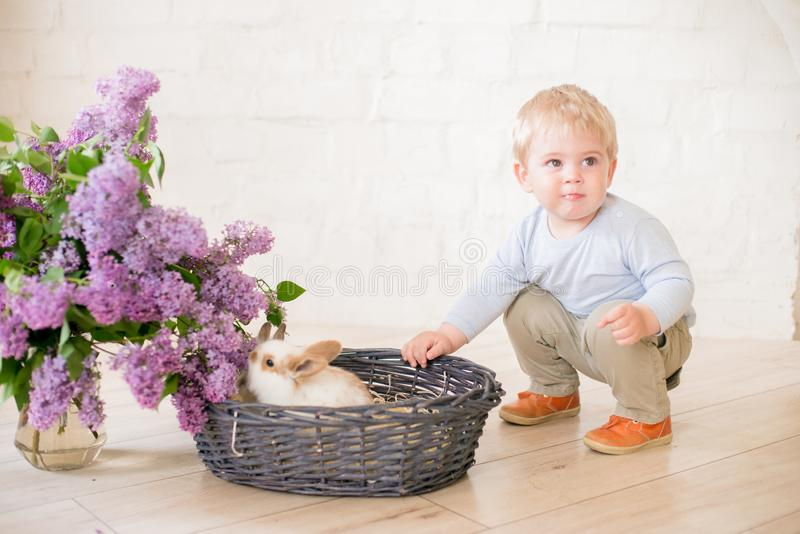 Little cute boy with blond hair with little bunnies with lilac flowers in a wicker basket stock photos