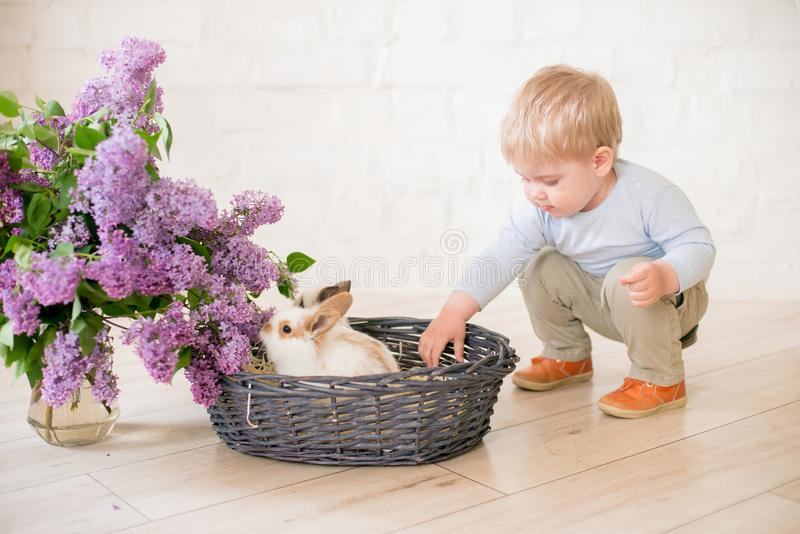 Little cute boy with blond hair with little bunnies with lilac flowers in a wicker basket royalty free stock photography