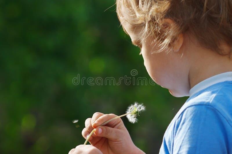 Little cute boy is blowing a dandelion