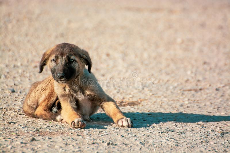Little, cute brown puppy is alone on the street. Concept of abandoned domestic animals stock images