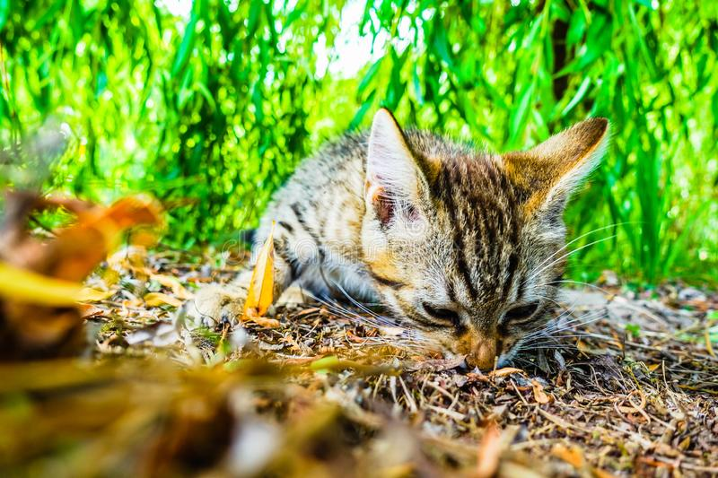 Little cat outdoors. Little cute cat outdoors near green tree royalty free stock image
