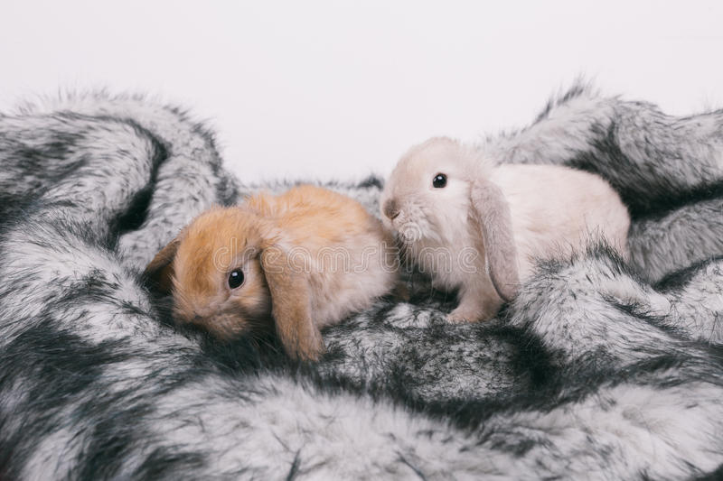 Little cute decorative rabbits royalty free stock image