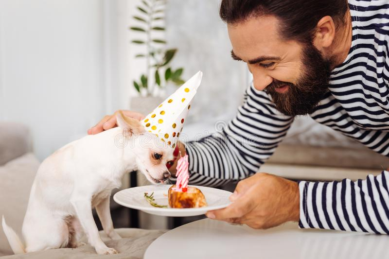Little cute dog tasting his nice sweet birthday cake. Birthday cake. Little cute dog tasting his nice sweet birthday cake while standing near his smiling owner royalty free stock photos