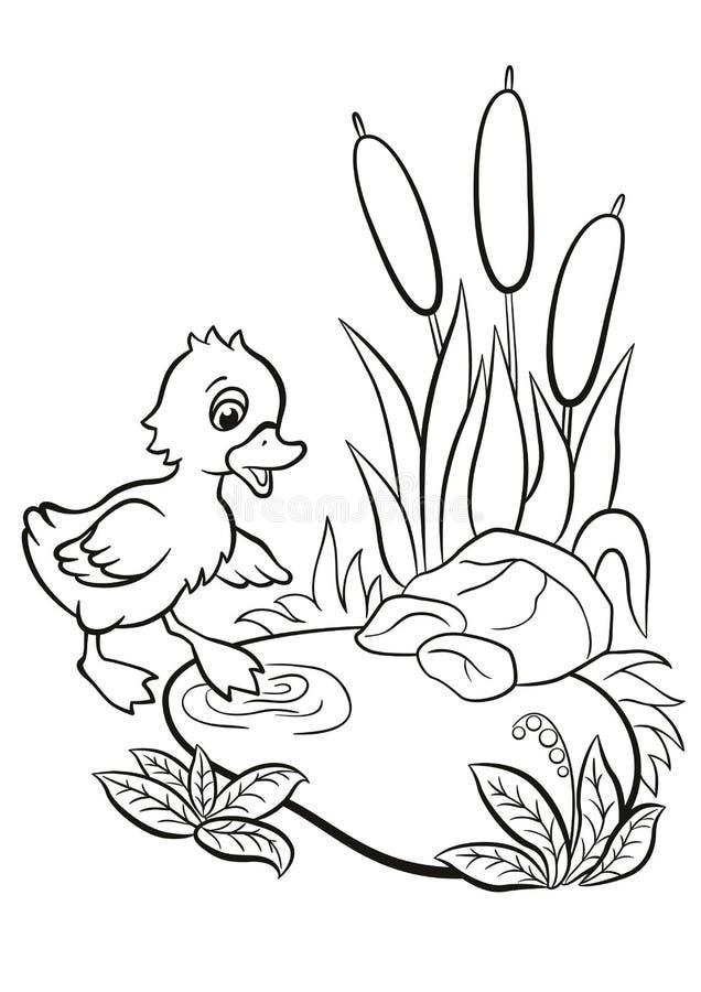 Printable Pond Habitat Coloring Page | Pond habitat, Pond plants ... | 900x636