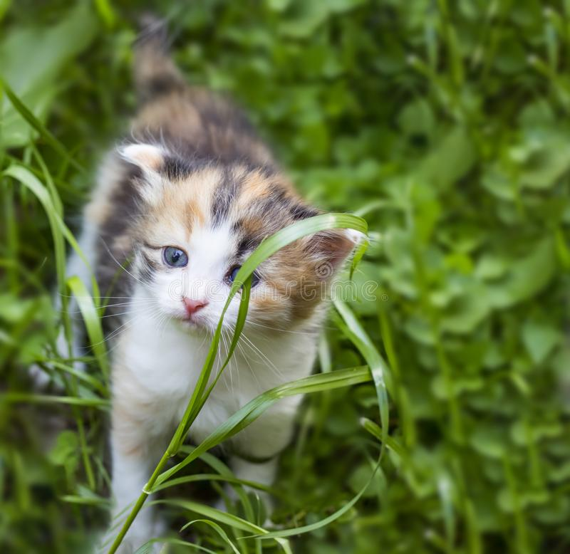 Little cute and funny kitten in green grass.  royalty free stock images