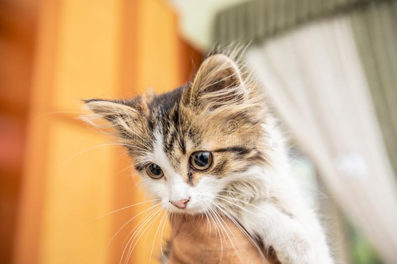 A little cute funny kitty with big eyes smiles. A little cute funny kitty smiles stock image