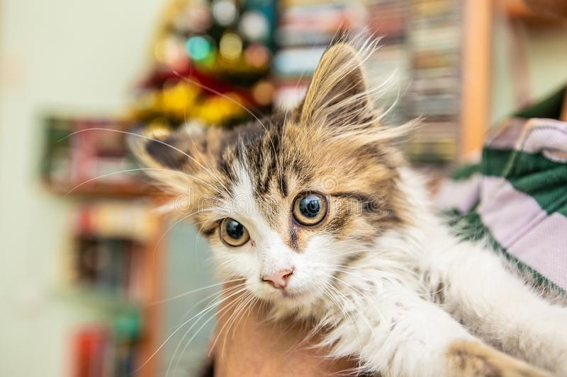 A little cute funny kitty with big eyes smiles. A little cute funny kitty smiles royalty free stock photo