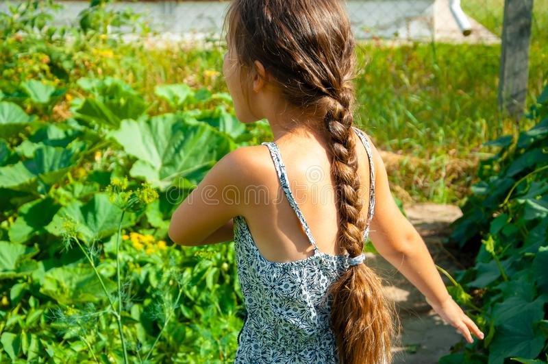 Little cute girl with a long braid, eating a cucumber plucked from the garden royalty free stock photo