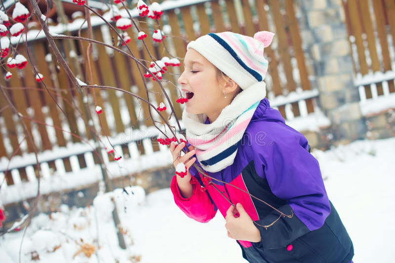 Little cute girl trying to taste red berries under snow on tree royalty free stock images