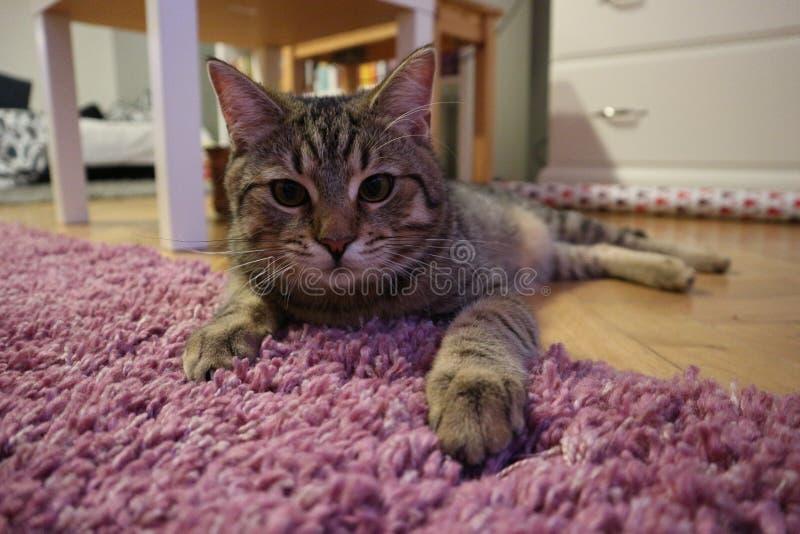 Little cute kitty lying on the floor stock photo