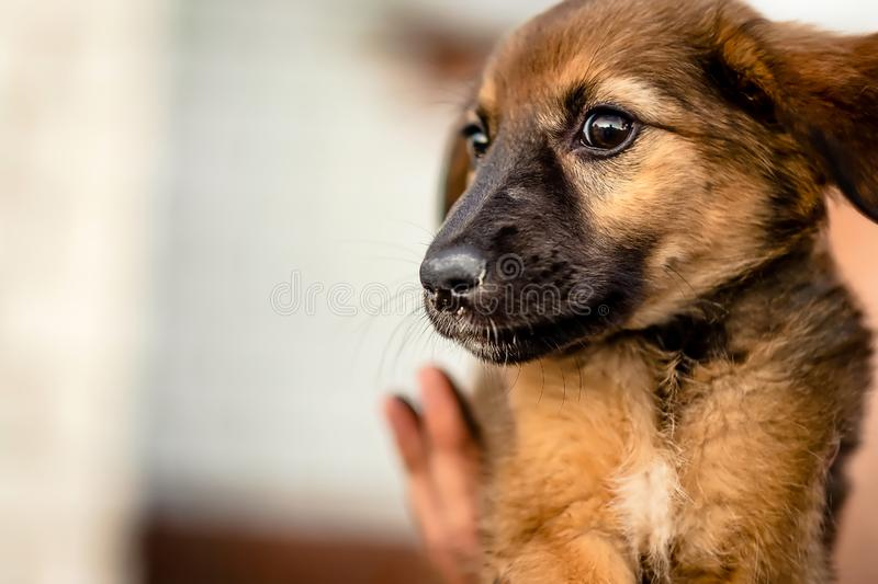 Little homeless puppy royalty free stock images