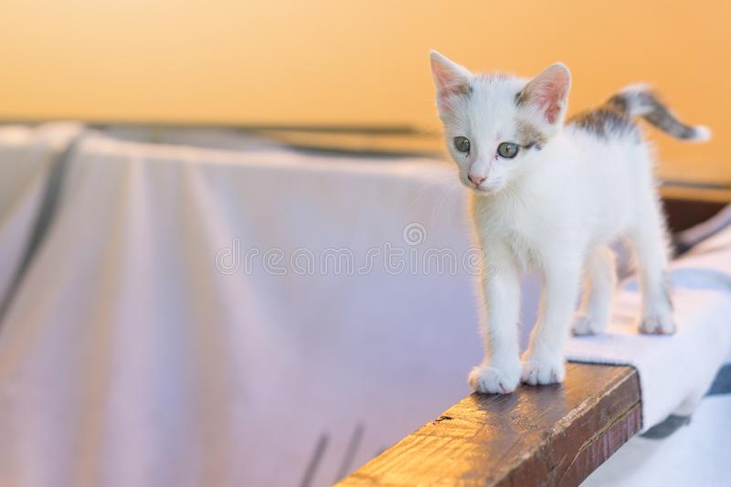 Little cute white cat walking on timber.  stock images