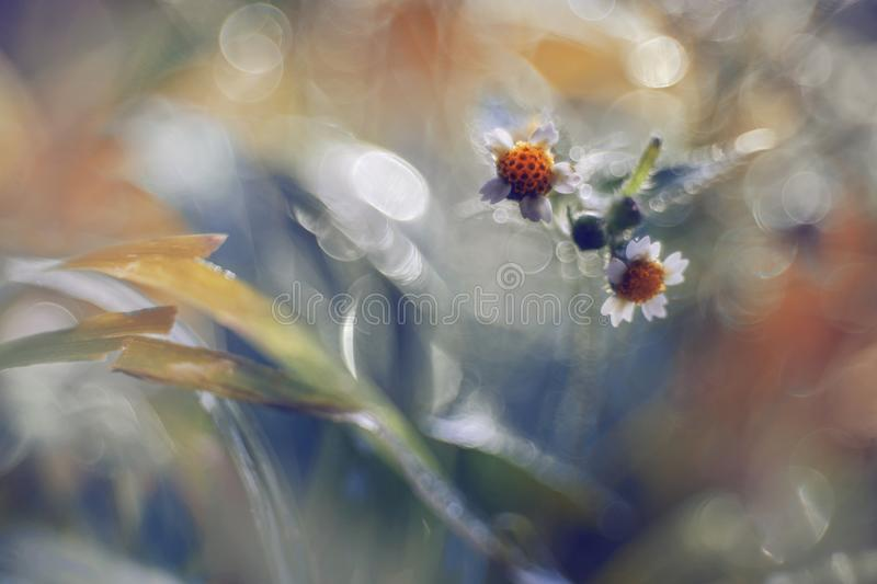 Little daisies with bokeh. Detail of little daisies with bokeh royalty free stock photo