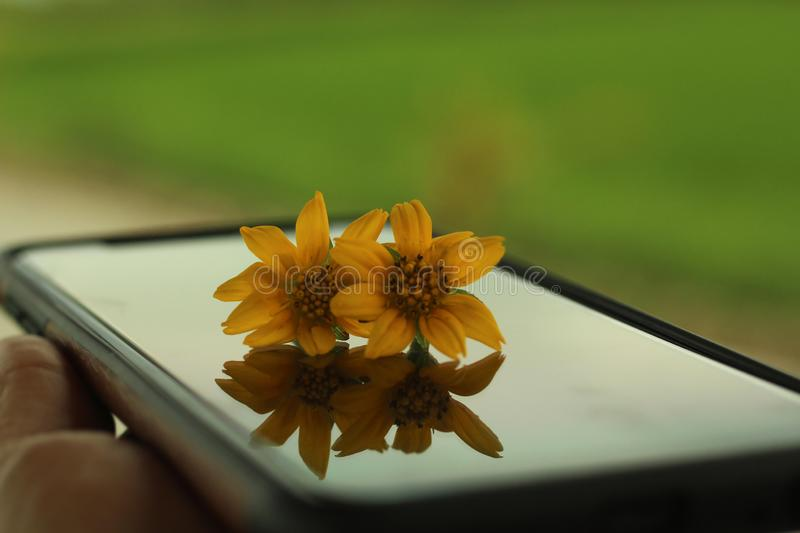 Little daisy flowers and its reflections on phone screen surface concept. Copy space on blurry green background royalty free stock photography