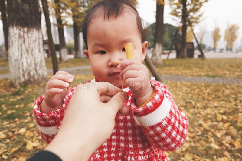 Little daughter take golden leaf of father hand at autumn stock images