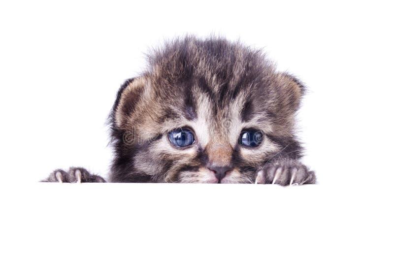 Little 14 days old kitten hiding stock photo
