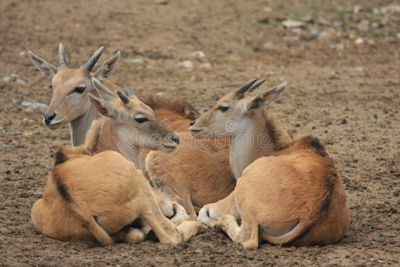 Little deers stock photos