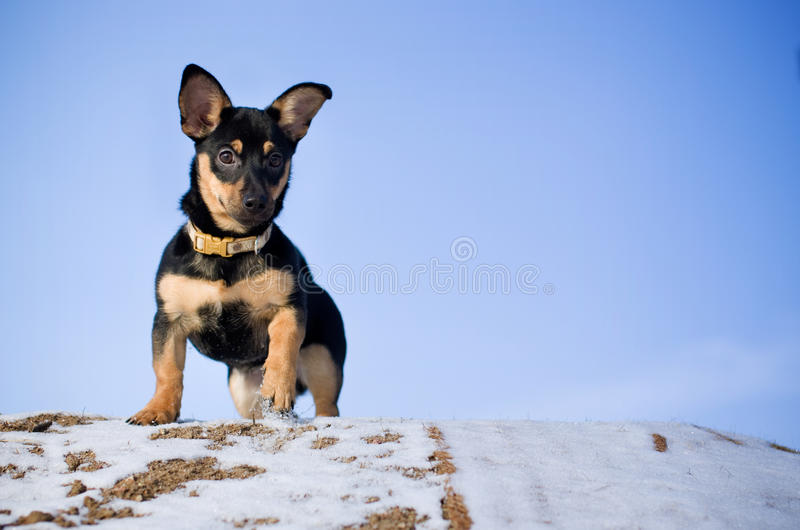 Download Little Dog Royalty Free Stock Photos - Image: 28594448