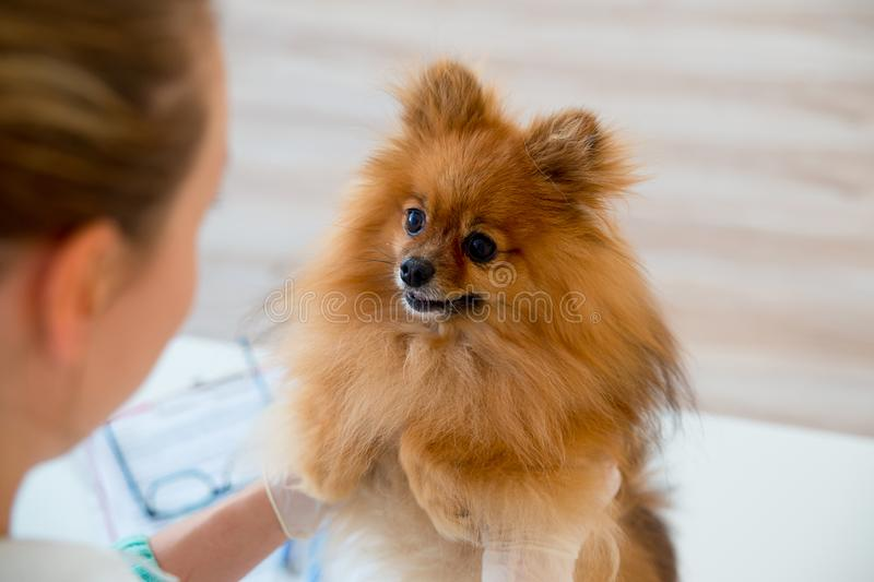 Dog with a vet royalty free stock photo