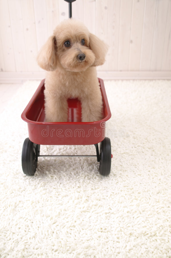 Little Dog in Car toy royalty free stock images