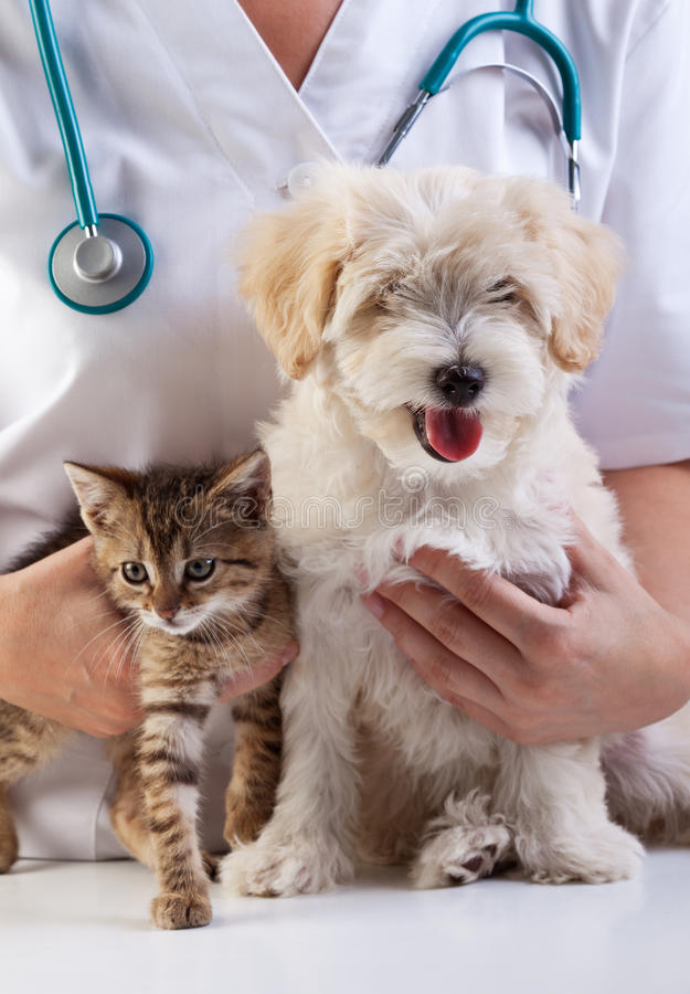 Little dog and cat at the veterinary royalty free stock photography