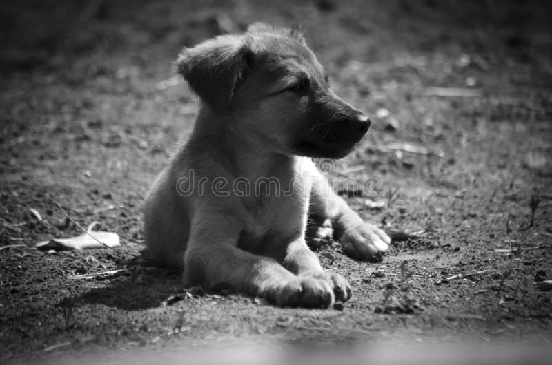 Little dog gets warm from the sun`s rays royalty free stock photography
