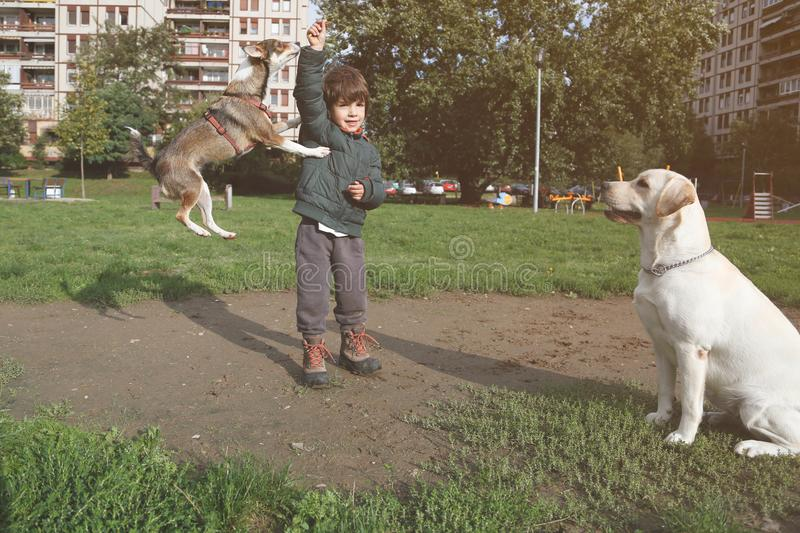 Little dog jumping and playing with kid while big dog watching royalty free stock photo