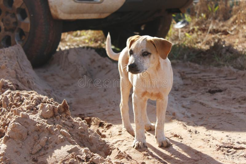Little dog in the middle of the sand royalty free stock image