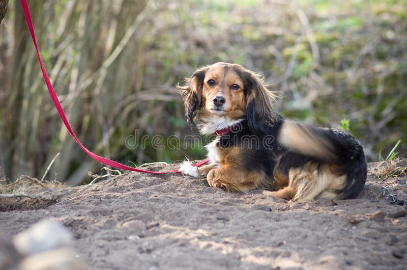 Little dog puppy royalty free stock photo