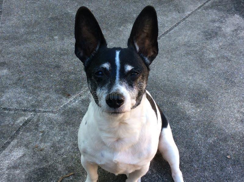 Little Dog stock image