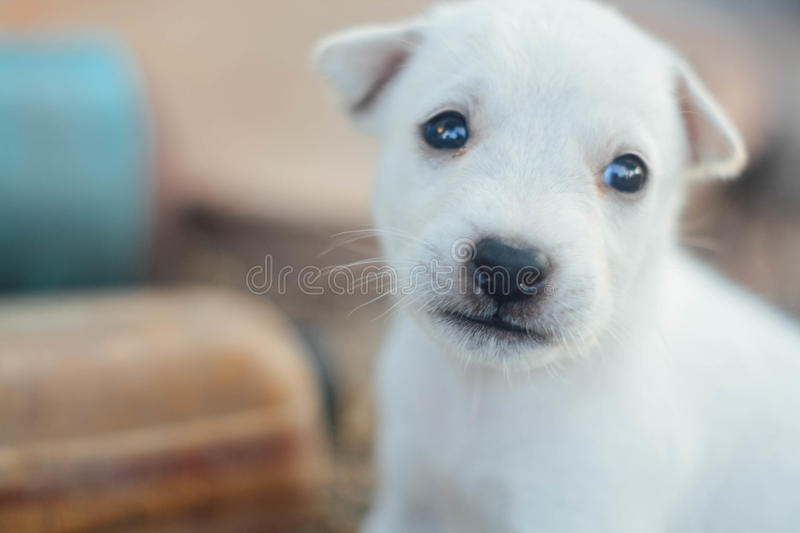 Little dog royalty free stock photography