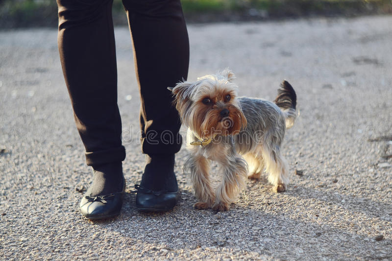 Little dog stock images