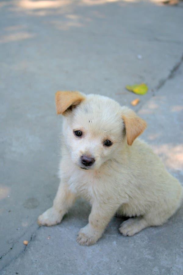 Free Little Doggie Stock Image - 5880981