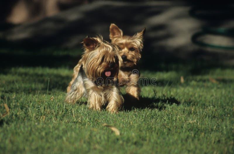 Little dogs stock photo