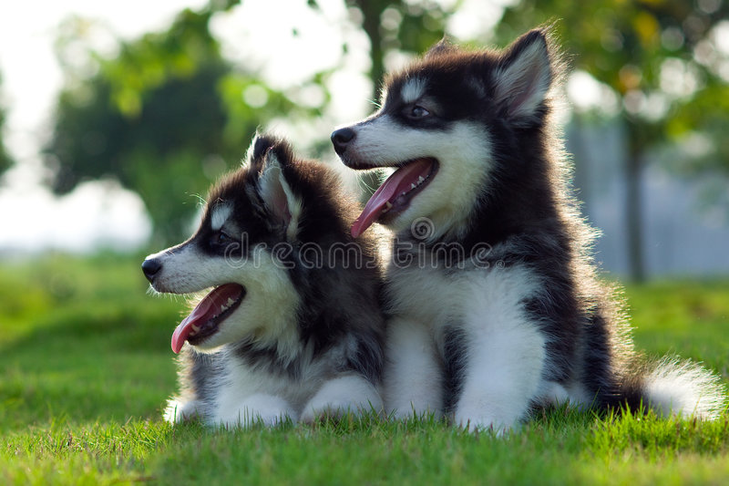 Download Little dogs stock photo. Image of grass, beautiful, smart - 6972618