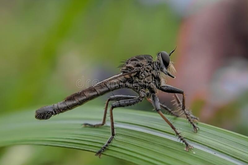 A Little Dragonfly stock photo