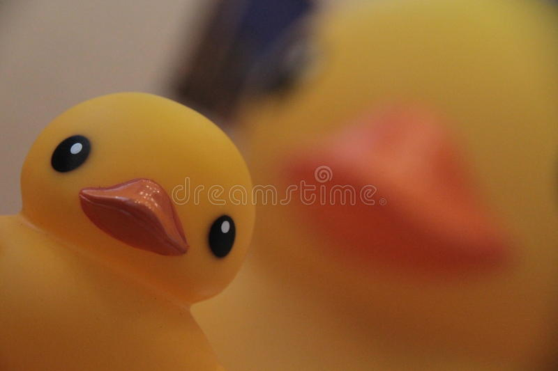 Little duck with Mummy duck royalty free stock photography