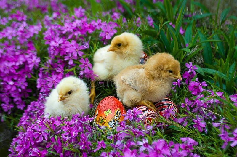 Free chicks pics