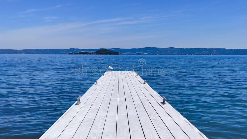 Little egret on Bolsena lake. Birds, nature, wildlife royalty free stock photo