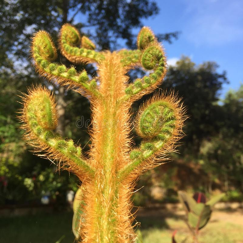 Cactus fractal plant with spiral shape. This little especies native of Southeast Mexico grows fully healthy in the hearth of Oaxaca mountains stock photo