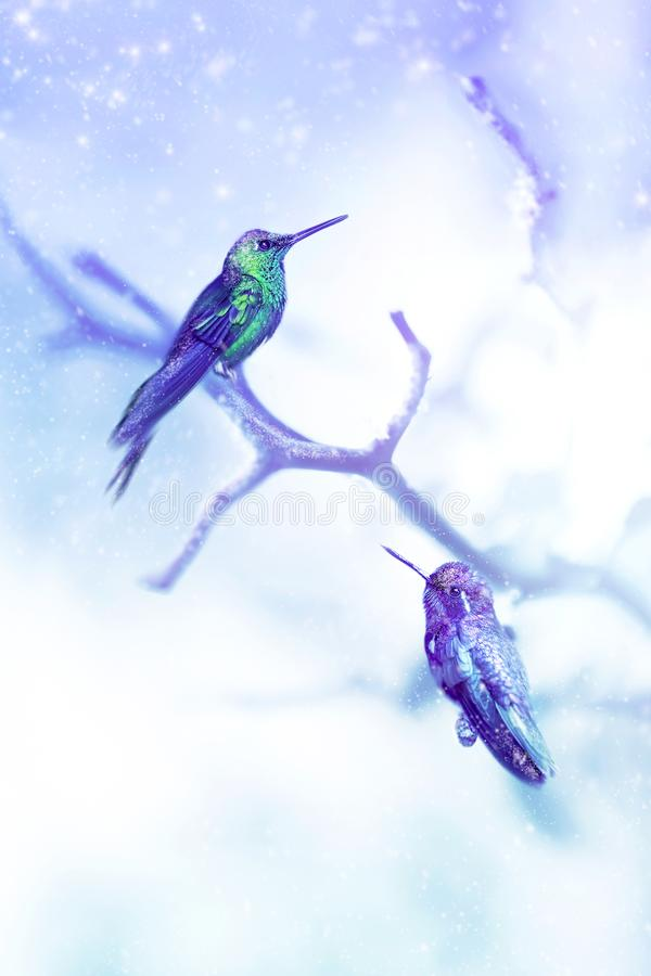 Little fantastic blue birds colibri in the snow and frost on the background of winter tree. Artistic Christmas winter image. royalty free illustration